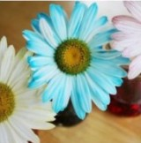 Painted Daisies Science Experiment