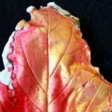Plaster Leaf Casting
